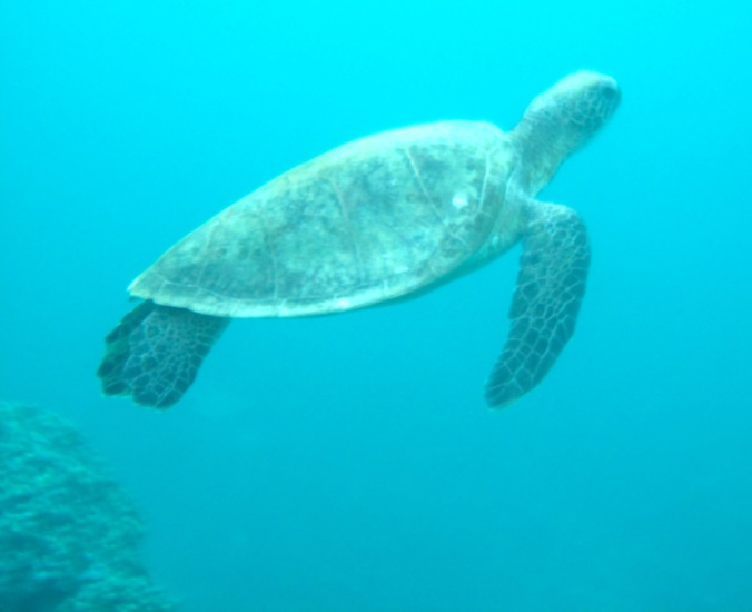 A friendly turtle that joined our dive.