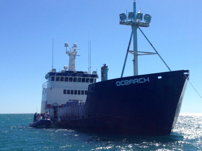 The Ocearch vessel. Big and solid.