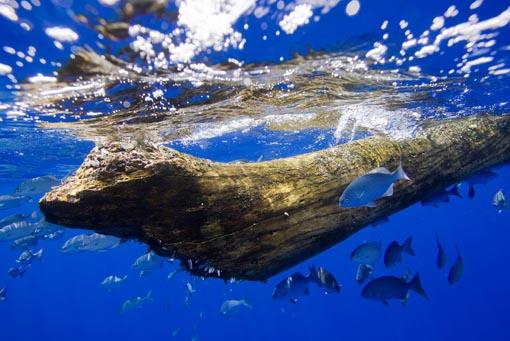 raft_fish