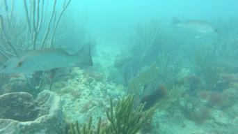 KeyWest_halo_surveyed_002_ReefscapeExample_03