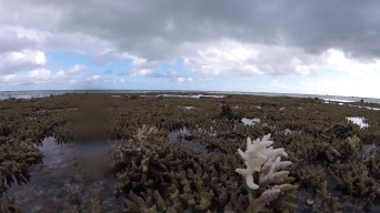 A lone bleached coral exposed during the full moon low tide